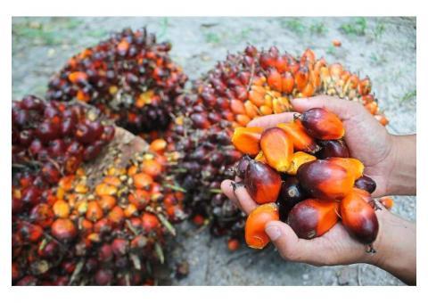 aceite de palma y aceite de girasol